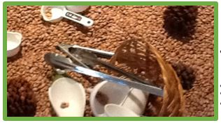 pouring and measuring with beans and seeds journeyintoearlychildhood